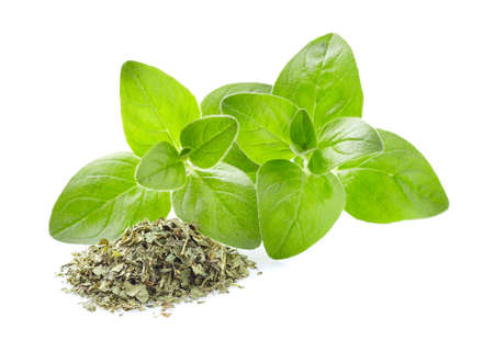 Fresh and dry oregano in closeup on white background