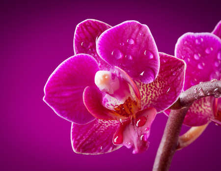 mini orchid on pink background Stock Photo