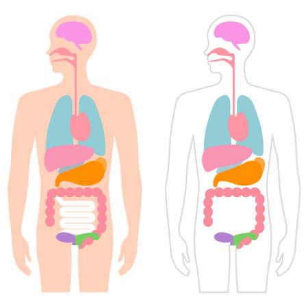 Human Body Visceral Illustration
