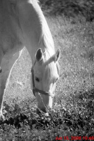 b&w horse in a meadow Banco de Imagens