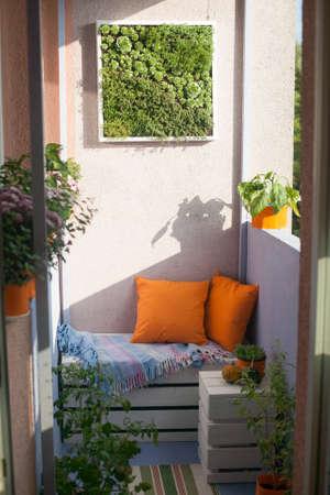House plants on the balcony