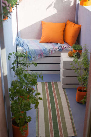 balcony window: House plants on the balcony