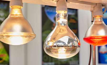 brooder: lamps for poultry Stock Photo