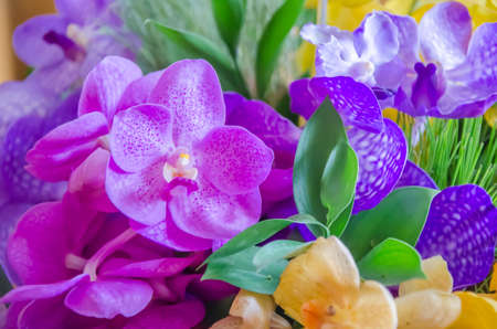 Purple and Pink orchid flowers close up  photo