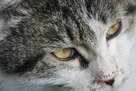 perseverance: CAT