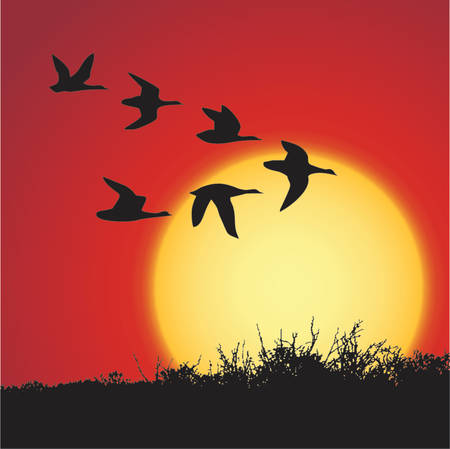 flying geese: landscape in sunset with silhouette birds