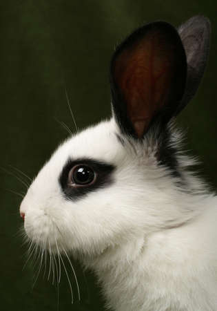 close up portrait of very cute rabbit photo