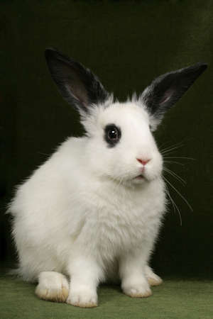 close up portrait of very cute rabbits photo