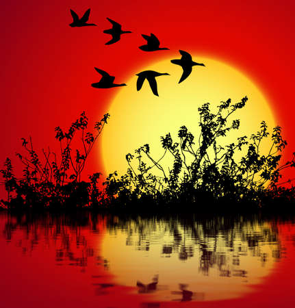 landscape on sunset with silhouette birds flying