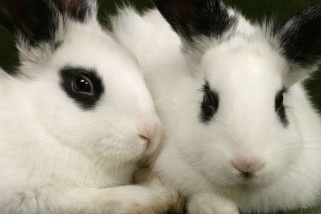 close up portrait of twin cute rabbits