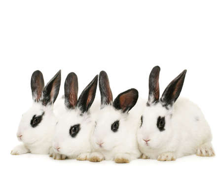 four cute rabbits isolated on white background Stock Photo - 2646681