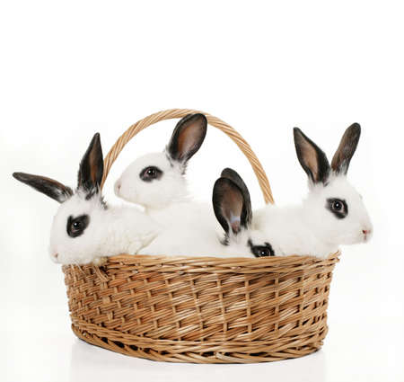 four cute bunnies in a basket isolated on white Stock Photo - 2646686