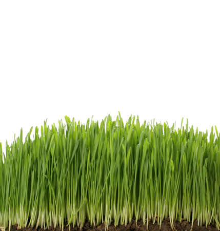 green fresh grass with dirt on white background photo