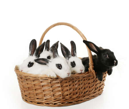 five cute bunnies in a basket on white background photo
