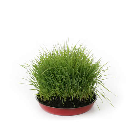 green fresh grass in dirt on white background Stock Photo - 2733777