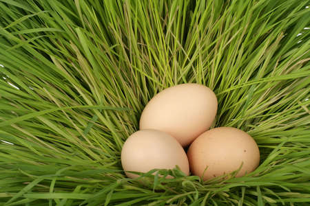 three easter eggs in a grass nest photo