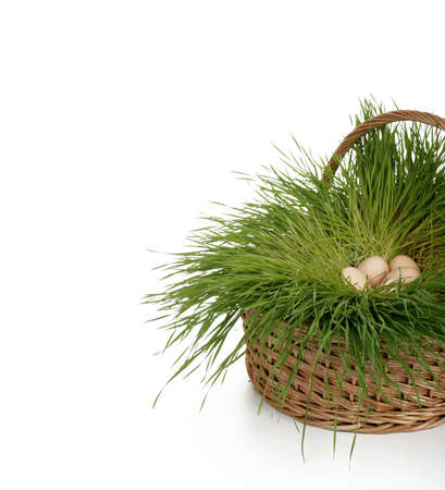 easter eggs on grass nest in a basket photo