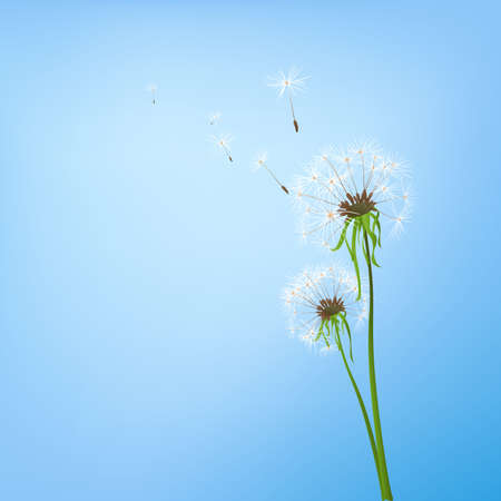 fragility: two dandelions in wind on light blue background