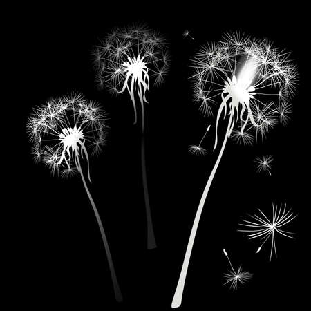 posterity: two dandelions in wind on light blue background