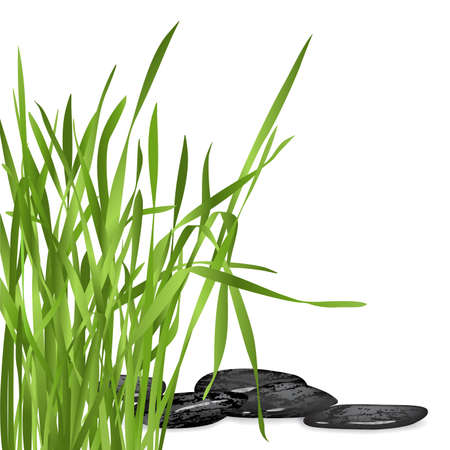 green fresh grass and black stones on white backround Stock Photo - 3080558
