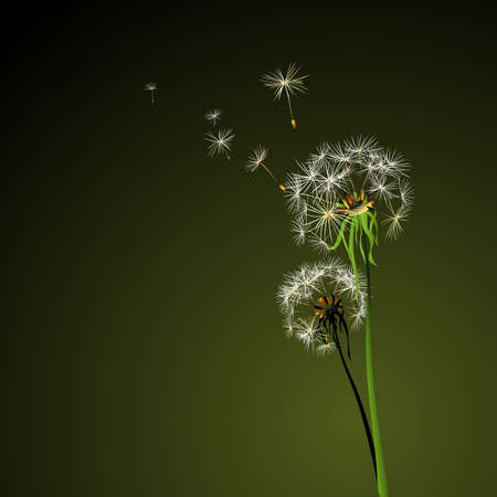 two dandelions in wind on light blue background photo