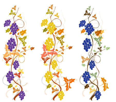 grapevine, harvest background Stock Photo - 5596299