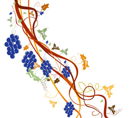 grapevine, harvest background photo