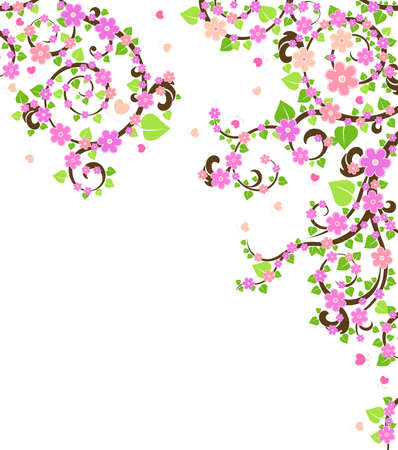 blossom cherry tree photo