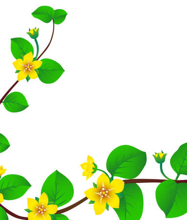 stamen: delicate flowers on branch blooming in spring time