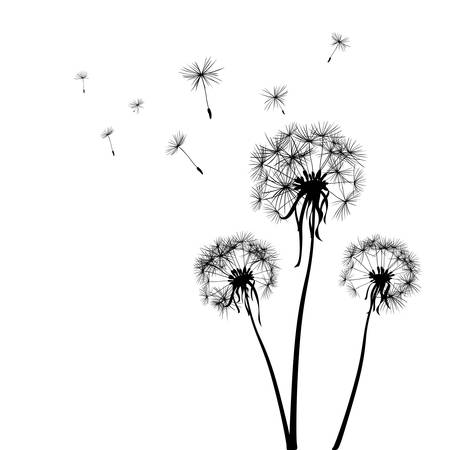 blowing of the wind: silhouettes of three dandelions in the wind