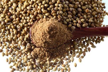 coriander seeds: Coriander seeds and Powdered coriander isolated on white background.