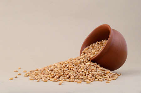 processed grains: Wheat grains in clay pot Stock Photo