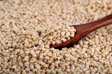 sorgo: close up of Sorghum with wooden spoon.