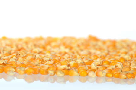processed grains: Dried corn Stock Photo