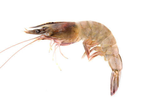 Fresh Prawn or Shrimp Isolated on white background Фото со стока