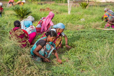 AMRAVATI, MAHARASHTRA, INDIA, JULY - 5, 2017: Unidentified woman worker working in the field, Gardening scene at park, woman worker cutting unwanted grass from garden.