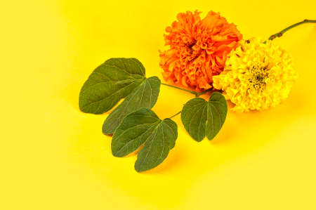 Indian Festival Dussehra, showing golden leaf (Bauhinia racemosa) and marigold flowers on a yellow background. Stock Photo