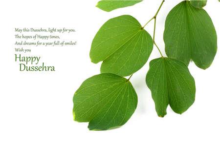 Indian Festival Dussehra, showing golden leaf, Piliostigma racemosum, Greeting card,