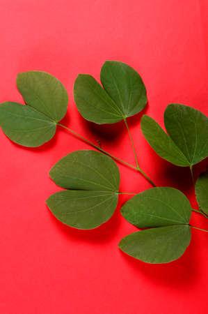 Indian Festival Dussehra, showing golden leaf on red background. Greeting card.
