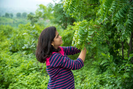 Young girl examine or observing Neem (Azadirachta indica) Tree leaf at field