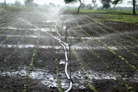 Sprinklers, Automatic Sprinkler irrigation system watering in the farm Stock fotó - 155450163