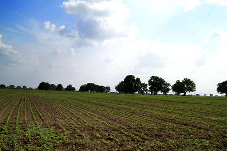 Agricultural landscape with green farm fields