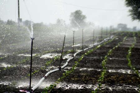 Sprinklers, Automatic Sprinkler irrigation system watering in the farm Stock fotó - 155450196