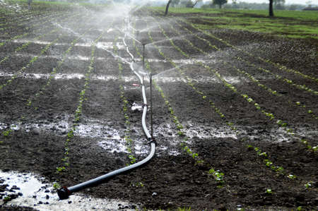 Sprinklers, Automatic Sprinkler irrigation system watering in the farm
