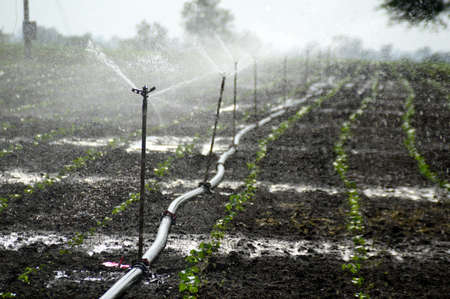 Sprinklers, Automatic Sprinkler irrigation system watering in the farm Stock Photo