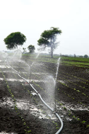 Sprinklers, Automatic Sprinkler irrigation system watering in the farm Stock fotó - 155450388