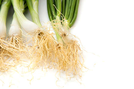 Fresh ripe green spring onions (shallots or scallions) on white background