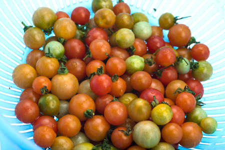 Close up of fresh cherry tomato as background