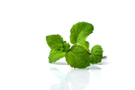 Fresh mint leaves isolated on white background 版權商用圖片