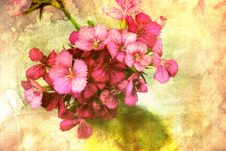 A bunch of pink flowers Stock Photo